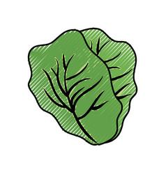 Fresh lettuce food vector