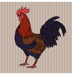 Realistic gorgeous rooster side view vector image