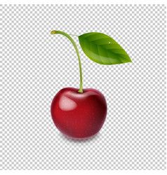 red cherry isolated white background vector image