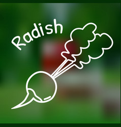 thin line radish icon vector image