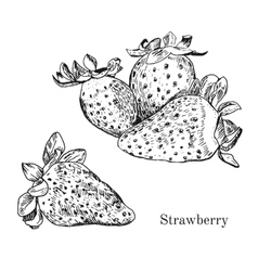 Hand drawn strawberry ink sketch vector image vector image