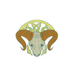 ram head celtic knot vector image