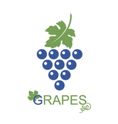 Grapes bunches icon vector