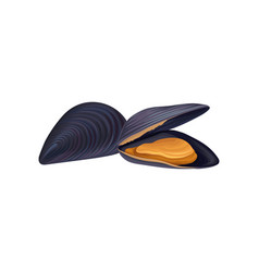 Mussels in black shell seafood concept fresh and vector