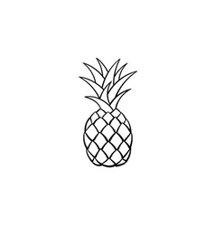 Pineapple hand drawn sketch icon vector