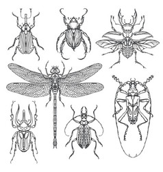 set various insects in hand drawn style vector image