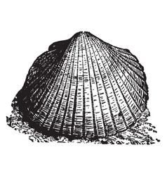 Shell vintage vector