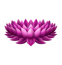 single pink lotus vector image