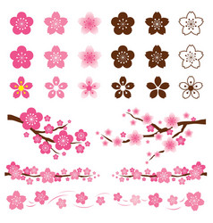 Cherry blossoms or sakura flowers ornament vector