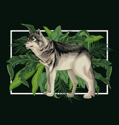 wolf in the jungle vector image