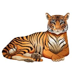 A tiger vector image