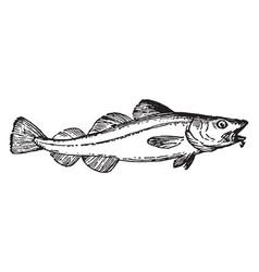 Cod vintage vector