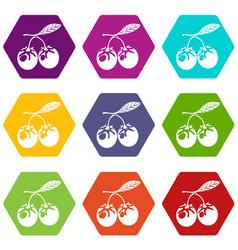 eco berry icons set 9 vector image