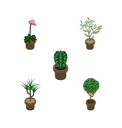 Isometric plant set of tree fern peyote and vector