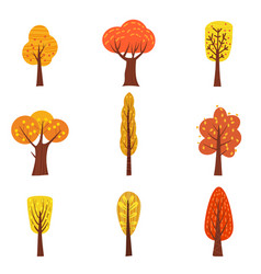 Set of autumn trees different types modern trend vector