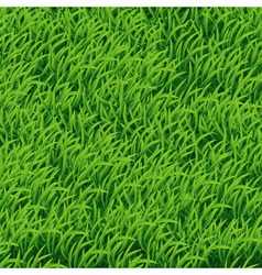 Background of Green Grass vector image