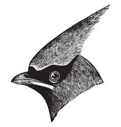 Cedar bird vintage vector