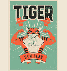 gym sport club grunge poster with muscular tiger vector image
