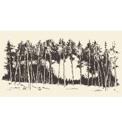Hand drawn landscape fir forest meadow vector image
