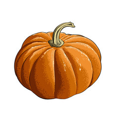 hand drawn sketch of pumpkin in color isolated vector image