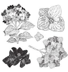 Sketch Set of Flowers vector image