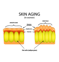 Skin aging in women infographics vector