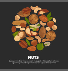 All species of nuts inside big circle on vector