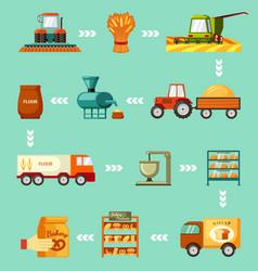 grain harvesting and baking steps set sowing vector image