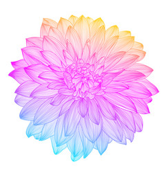 hand drawing rainbow flower vector image