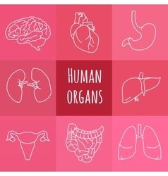 icons of human organs vector image