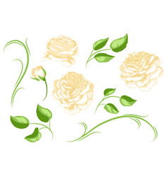 set of yellow roses beautiful decorative flowers vector image
