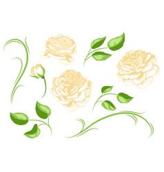 set yellow roses beautiful decorative flowers vector image