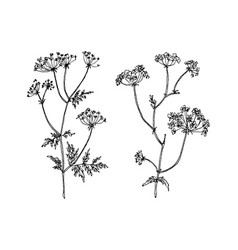 wild and herbs plants set botanical hand drawn vector image