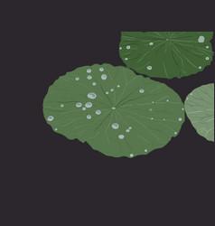 water drops on lotus leaf sketch vector image