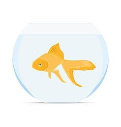 Goldfish in bowl vector image