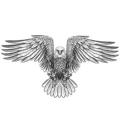eagle flying bald eagle vector image
