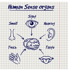Synopsis of human sense organs sketch vector