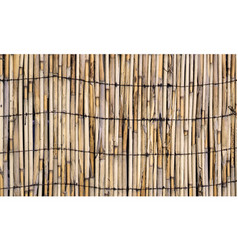Texture of wall of bound bamboo vector