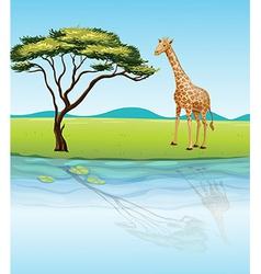 A giraffe beside the river vector