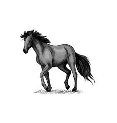 Horse sketch black arabian stallion vector