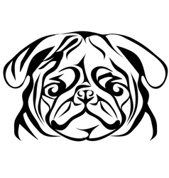 pug on white vector image