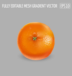 Ripe unpeeled orange on a gray background vector