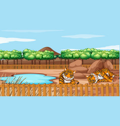 scene with two tigers at zoo vector image