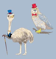 set funny birds vector image