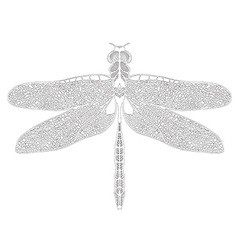 Hand drawn dragonfly on white background vector image vector image