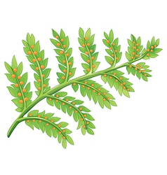 A fern plant vector