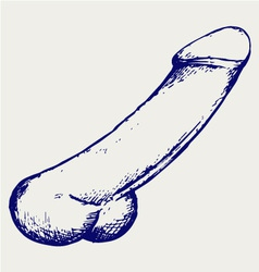 Anatomy of penis vector image