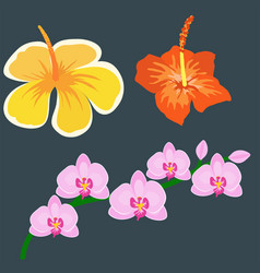 beautiful tropical flower set design summer plants vector image