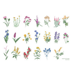 Collection of beautiful wild herbs herbaceous vector