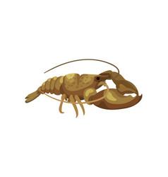 Fresh lobster on white background sea inhabitant vector